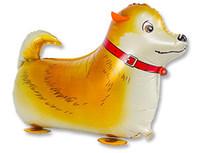 1208-0376 К ХОД Собака рыжая