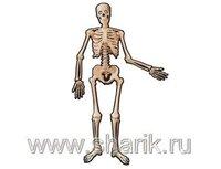 1401-0113 Баннер Скелет подвижный 1,4м/А